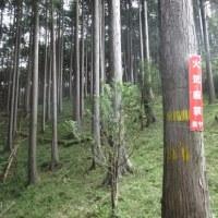 毎年恒例の地域行事 吉原祇園祭と区有林下草刈り