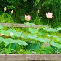 今週のリハビリ・・・この湿気、日本の夏(^_^;)