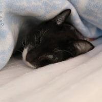 オブジェ化トイレと寝坊助ネコ
