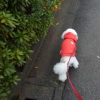 寒いですね…(((=_=)))