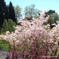 本日の写真【春のスペイン・グラナダは花がいっぱい vol.2】