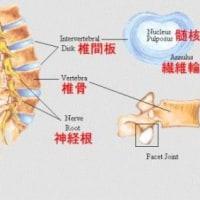 腰痛 原因/背骨について知ろう
