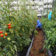 夏野菜の畑はワンダーランド