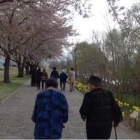 桜を追いかけて〜パート2