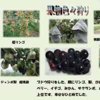 秋の味覚・果物色々