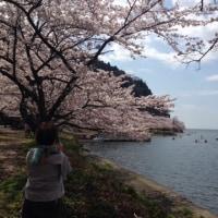 4月13日 桜を愛でに!