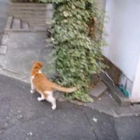 山手線新宿駅(西新宿三丁目 住宅地の中のネコ)