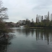神田川沿い桜歩き(1)