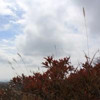 山岳点景:秋、標高1,500