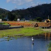 川で拾い食い:コウノトリJ0067の観察と滞在記録更新