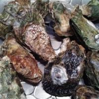 早速おいしい牡蠣料理☆オイスターロックフェラー