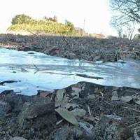 冬の田に薄氷 しぶとく残る
