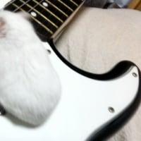 ギターだって弾きまちよ