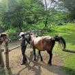 木曽馬などの日本の在来種の馬の姿を見ていると幸せな気分になる