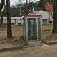 城跡公園に、桜のトンネルを見ました。