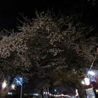 4月20日の散歩道