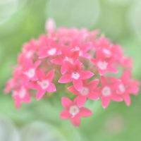 「君に捧ぐ!」 いわき フラワーセンターにて撮影! 可愛い花