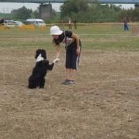 犬のイベントお知らせ 競技会と合同練習