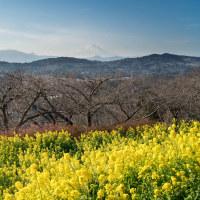 神奈川県中郡二宮町 樹木と空 by空倶楽部 風景写真 / Sony α7RⅡ