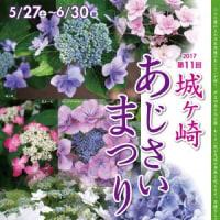 あじさい 四季の花