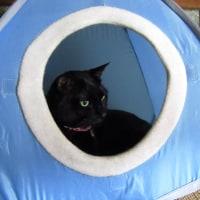 青い猫テント