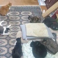 居間組全員集合
