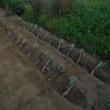 一心不乱で雑草取りと葱の植え付けやりました