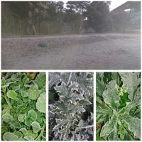 The first frost of this season