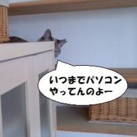 猫に怒られる