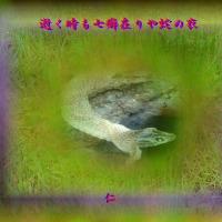 フォト575qt2603『 逝く時も七癖在りや蛇の衣 』