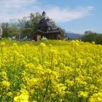 幸せの黄色いじゅうたん