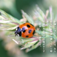 紅花(⌒‐⌒)