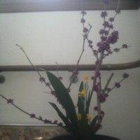 今日は庭の花を使って…