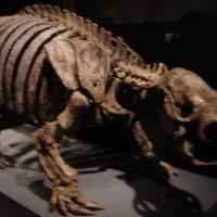 博物館浴(国立科学博物館 「大英自然史博物館展」)