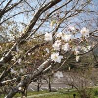 宮崎県「森の科学館」