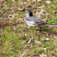 2月18日の鳥撮り散歩・・・