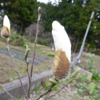 白い花たちも咲き出した