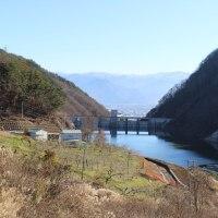浅川ダム試験湛水58日、鴨のつがい登場です