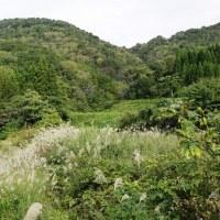 里山の景色