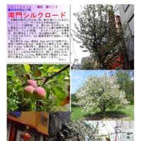 南門シルクロード  姫リンゴ