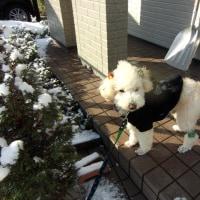 本日きれいになりました。吹雪でお散歩中止。