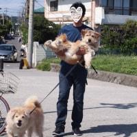 6/4ニコニコ卒業わんこin湘南いぬ親会