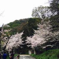 山崎桜バザーでフラダンス