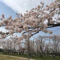 桜の森公園  その2