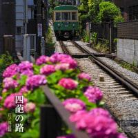 かまくら紫陽花便り『四葩の路 2017』  江ノ電・御霊神社界隈
