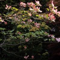 春の花 170422