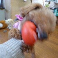 2017 1/17★今日はわさび君・桃ちゃん・チャッピー君です^m^