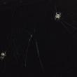 蜘蛛を掴むような話