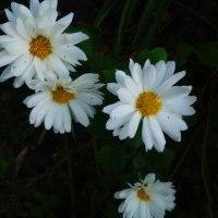 12月10日の花
