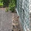 cat in CATS!?